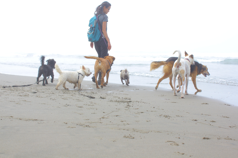 d_shelley_dogwalking