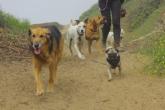 d_dogwalking