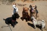 dog_gossip